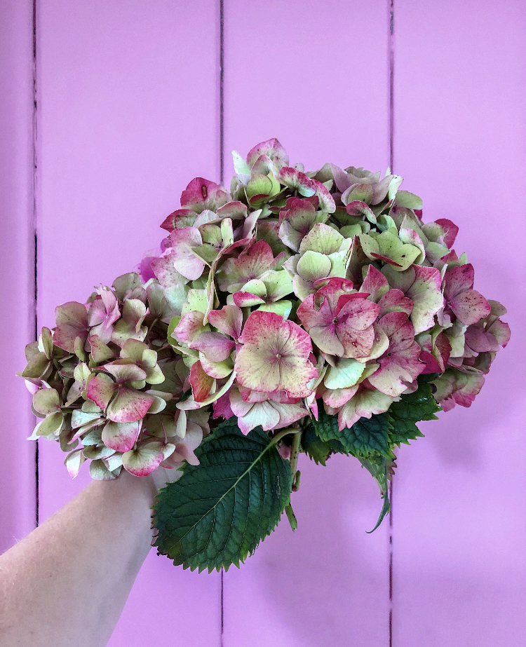 10 DIY Projects in Lockdown - A bouquet of hydrangea in front of a pink door